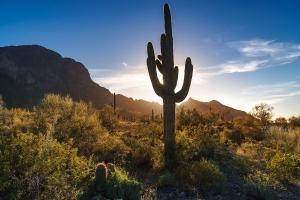 3.Tag Imperial, Saguaro 028