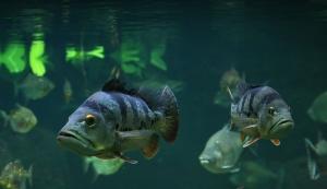 Fische (1)