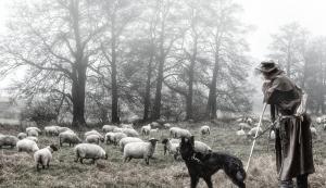 Schäfer im Nebel