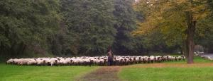 die ganze Herde