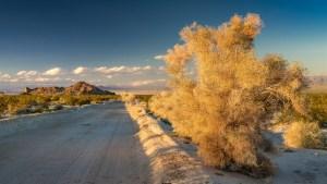 Mojave-Wüste-002