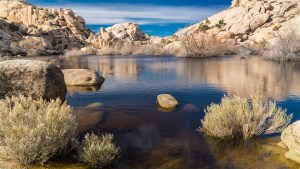 Mojave-Wüste-004