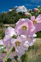 Santa Eularia  (2)