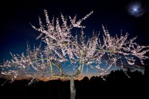Mandelbaum bei Nacht