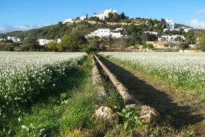 Puig den Missa con Flores  (3)