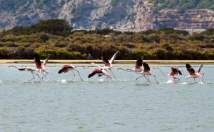 Salinas u. Flamingos  (10)