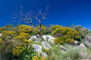 Wanderung vom Atalaia nach Cova de Culleram (4)