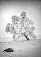 Röhn-Winter