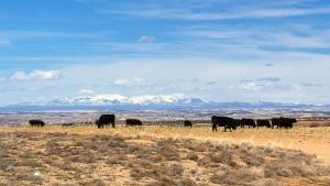 Angus Rinder, Chaco Canyon 006
