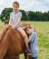 bei den Pferden (4)