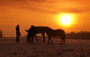 Winterabend mit Pferden