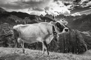 Südtirol sw (13)