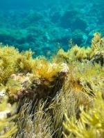 UW Illa Plana 12 (1)