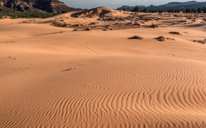 Pink Dunes (6).jpg